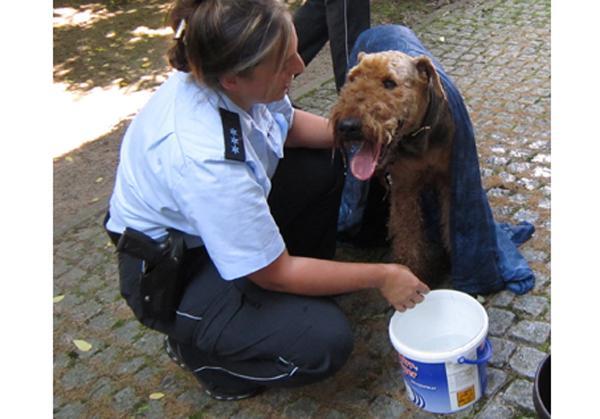 Hund vor Hitzekollaps gerettet.