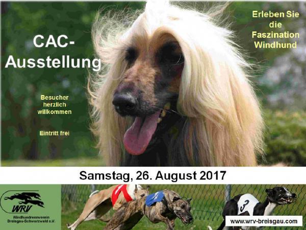Windhund-Ausstellung