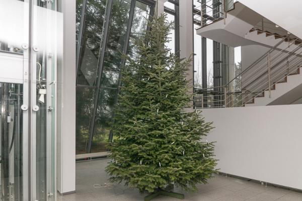 60 Kindergartenkinder Schmücken Christbaum Im Emmendinger Rathaus   Noch  Steht Die Tanne Ungeschmückt In Der Eingangshalle