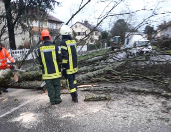 In der Markgrafenstraße war ein großer, gemeindeeigener Baum umgestürzt und hatte die Fahrbahn blockiert
