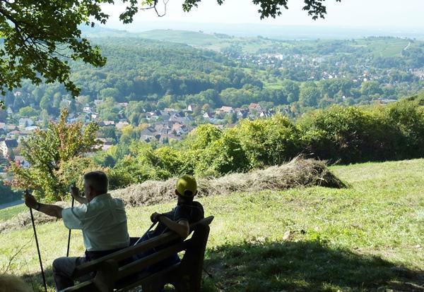 Ab 15. Mai, mittwochs in 14-tätigem Rhythmus: WANDERN und GENUSS mmelswiese   (CR Karin Schmeißer)