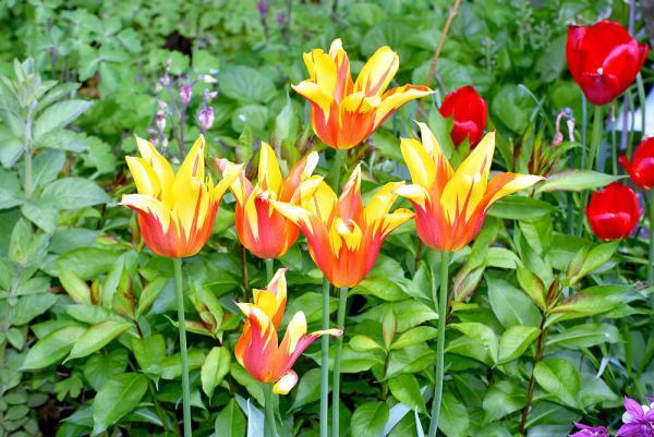16. Juni: Offene Gartentür in Herbolzheim, Emmendingen und Simonswald. Leuchtend blühende Blumenpracht im Garten von Rita Dauenhauer in Simonswald.  Foto: Landratsamt Emmendingen
