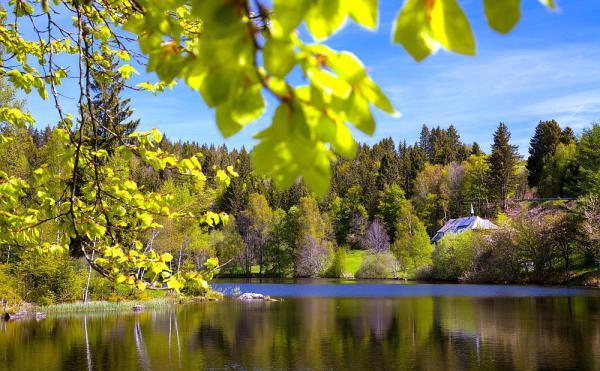 29. Juni: Natur-Juwelen im Biosphärengebiet entdecken. Klosterweiher bei Dachsberg.  Foto: Biosphärengebiet/Clemens Emmler