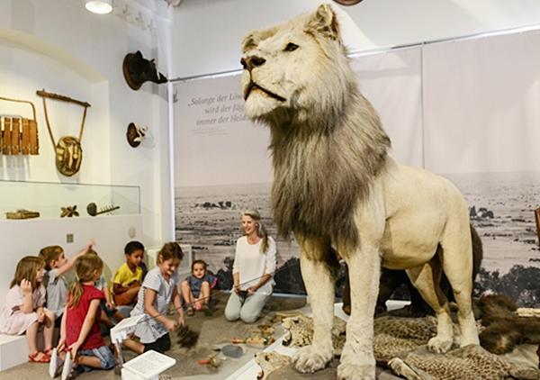 Komm wir gehen auf Löwenschau!  Foto A.Bleyer