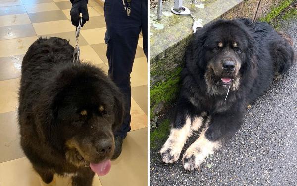 """Vierbeiner schlenderte eine Stunde durch Lahr - Polizei-Streife konnte Hundefährte """"aufnehmen"""" und nach kurzer Verfolgung den """"Ausbrecher dingfest machen"""".  Foto: Polizei"""