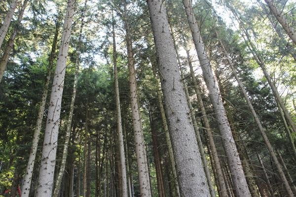 Wald im Simonswäldertal   Foto: Landratsamt Emmendingen – Ulrich Spitzmüller