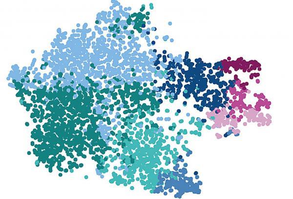 Immunwächter im menschlichen Gehirn neu vermessen. Einzelzellanalyse von Mikrogliazellen: Jeder Punkt zeigt eine Zelle und die Farben signalisieren verschiedene Gruppen von Mikrogliazellen, wie sie im menschlichen Gehirn vorkommen.  Foto: Universitätsklinikum Freiburg