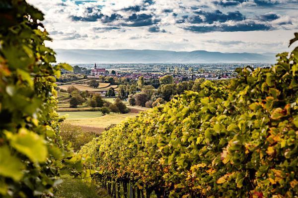 """""""Abstimmen für Ettenheim - jede Stimme zählt"""" - Deutsches Weininstitut zeichnet besonders spektakuläre Aussichtspunkte in die Weinlandschaften als """"Schönste Weinsicht 2020"""" aus.  Foto: Stadt Ettenheim"""