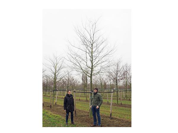 Von Bäumen umgeben. Philip Denkinger (l.) und Wolfram Reinhard von der städtischen Abteilung Grünflächen und Umweltschutz.   Foto: Stadt Offenburg