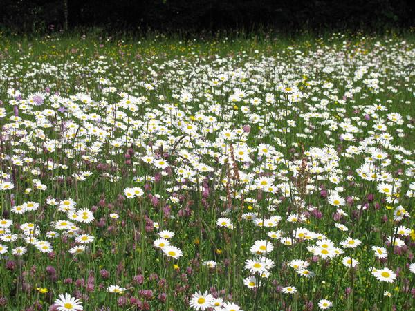 """Die """"Blühenden Naturparke"""" sind gut für Insekten und fürs Auge!   Bild:© VDN/ Achim Hoffmann"""
