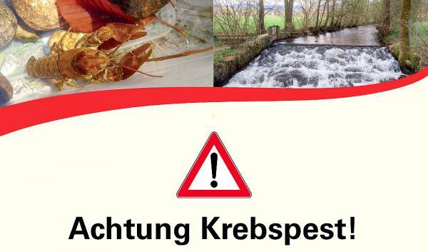 Bis 31. Dezember: Betretungsverbot der Brugga wegen Krebspest wird verlängert - Weiterhin tote Dohlenkrebse in dem Gewässer im Dreisamtal.  Foto: Regierungspräsidium Freiburg