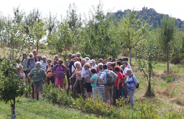 """11. September: Biosphärengebiet Schwarzwald lädt zu Exkursion ins """"Obstparadies"""" nach Staufen ein. Obstparadies Staufen.  Foto: Regierungspräsidium Freiburg"""
