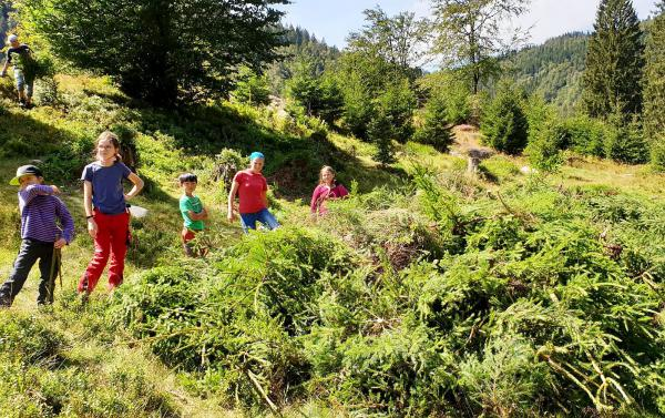 Junior Ranger entdeckten den Bergwald - Rund 20 Kinder beteiligten sich an Sommerangebot des Biosphärengebiets Schwarzwald. Im Rahmen der Junior Ranger Sommer Tagen gab`s auch einen Landschaftspflegeeinsatz im Menzenschwander Tal.   Foto: Regierungspräsidium Freiburg - Biosphärengebiet Schwarzwald