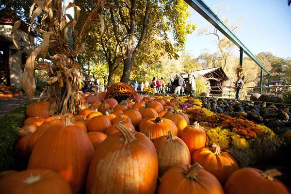 180.000 Kürbisse zieren zur Halloweenzeit den Europa-Park
