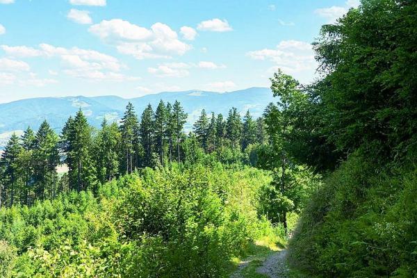Was denkt Freiburg über den Stadtwald? - Studie untersucht die Wahrnehmung von Baumarten. Wie sehen Waldbesuchende die Baumarten im Freiburger Wald?  Foto: Forstliche Versuchs- und Forschungsanstalt Baden-Württemberg