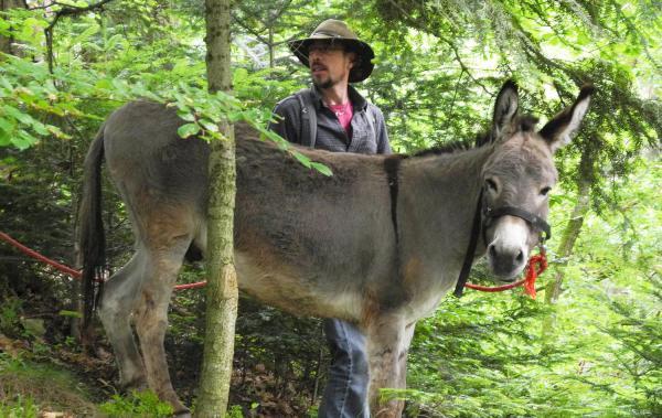 23. Oktober: Eselwanderung und Wildkräuterführung in Bad Krozingen.  Foto: Kur und Bäder GmbH Bad Krozingen