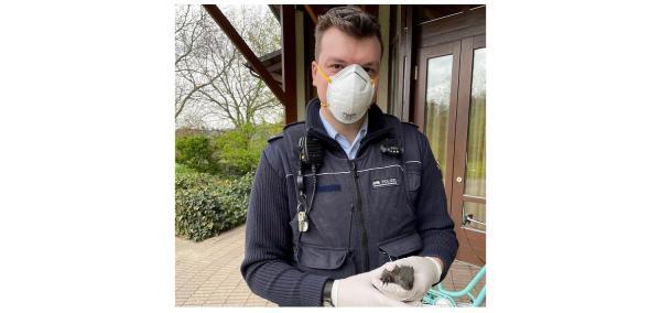 """""""Tierischer Einsatz"""" für Polizei in Friesenheim - Kleines Eichhörnchen suchte Hilfe bei Beamten.  Foto: Polizei"""