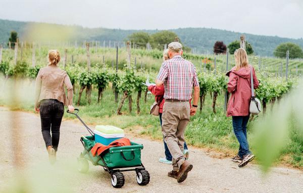 Ab 19. Juni: Weinwanderungen in den Weinbergen um Emmendingen.  Foto: Stadt Emmendingen